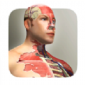 放置人体模型最新版v1.0 安卓版