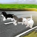小猫对决正式版手游v1.2 最新版