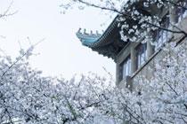 武汉大学云赏樱是怎么回事 云赏樱在哪观看