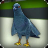 狂暴鸽模拟最新版v1 安卓版