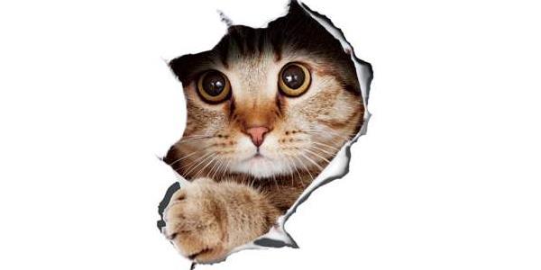 给动物加特效的软件