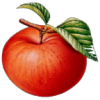 和平精英APPLE辅助破解版appv1.0.3 最新版