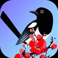 喜鹊快讯app最新版v1.0 手机版