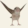 救救那小鸟手游正版v1.2